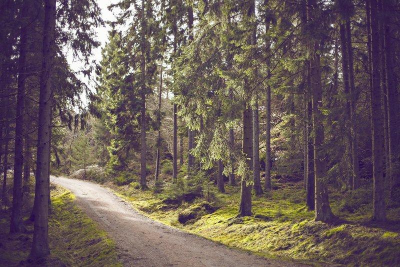 Dziewięć zaleceń terapii Gestalt